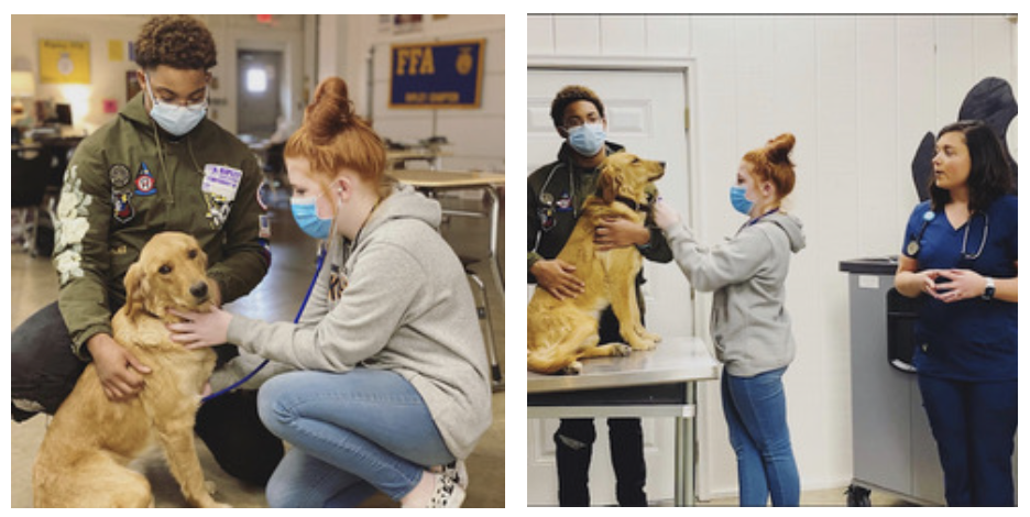 Veterinary and Animal Science Program of Study at RHS